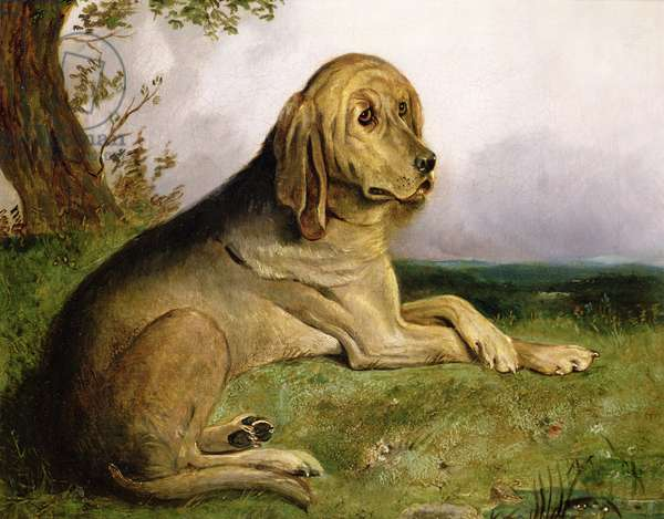 A Bloodhound in a Landscape (oil)