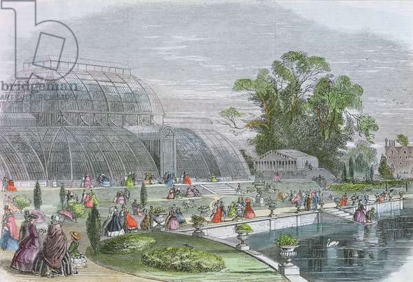 Kew Gardens: Palm House (engraving)