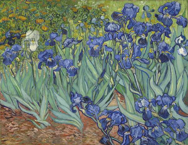 Irises, 1889 (oil on canvas)
