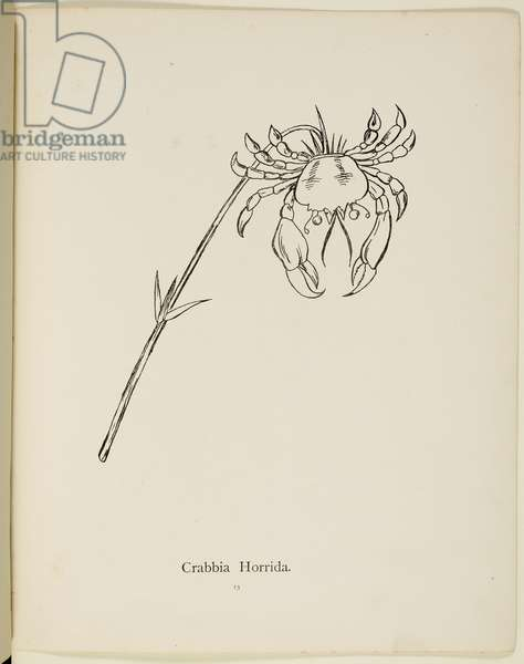 Fictional plant: 'Crabbia Horridia' Illustration from Nonsense Botany by Edward Lear, published in 1889.