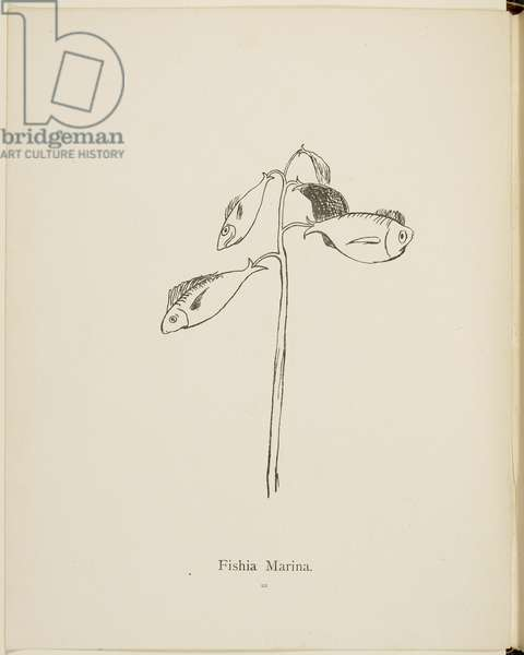 Fishia Marina (fictional plant) Illustrations and titles of plants from the Nonsense Botany collection by Edward Lear.