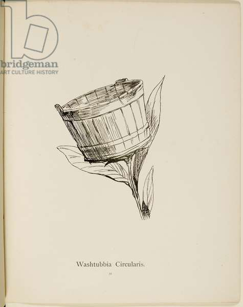 Fictional plant: 'Washtubbia Circularis' . Illustrations from Nonsense Botany, and Nonsense Alphabets by Edward Lear.