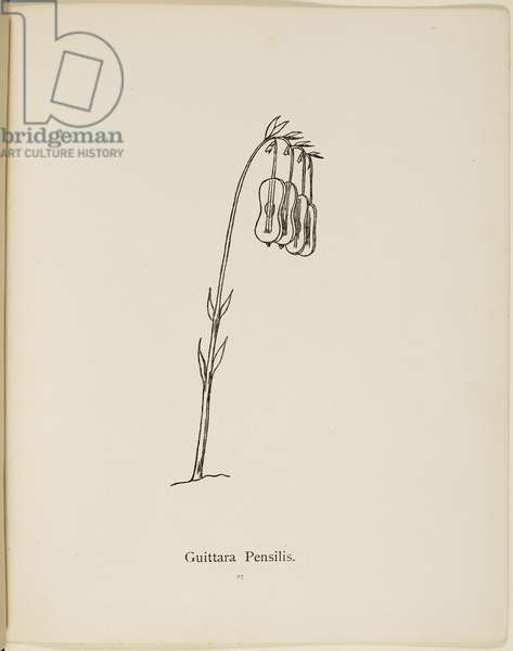 Fictional plant: 'Guittara Pensilis'. Illustration from Nonsense Botany by Edward Lear, published in 1889.