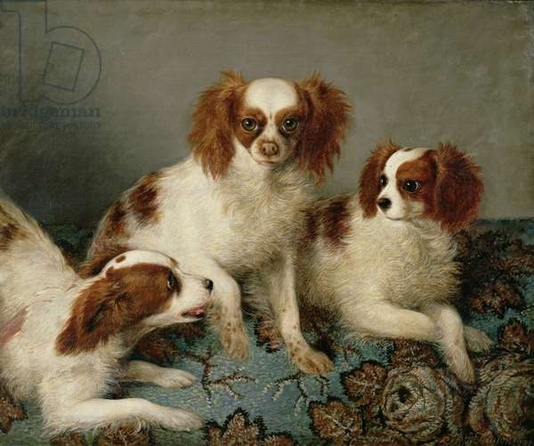 Three Cavalier King Charles Spaniels on a Rug (oil on canvas)