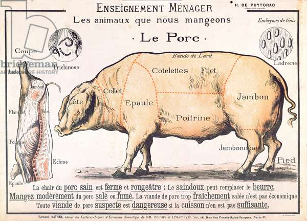 Cuts of Pork, illustration from a French Domestic Science Manual by H. de Puytorac, published by Editions Fernand Nathan, late 19th century (colour litho)