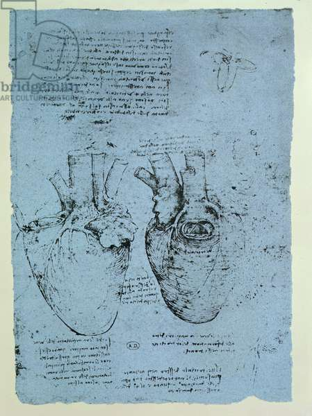 The Heart, facsimile of the Windsor book (pen and ink on paper)