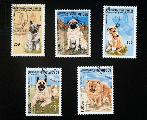 Top left and right, Postage stamps honoring puppies and dogs depicting Elkhound and Collie, 1996, Republic of Guinea