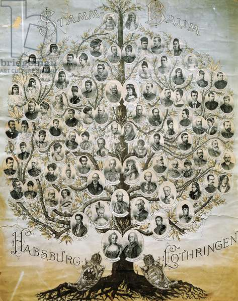 Family tree of the Imperial Dynasty of the Habsburgs.