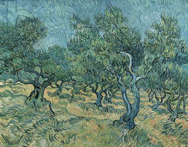 The olive grove by Vincent van Gogh (1853-1890)