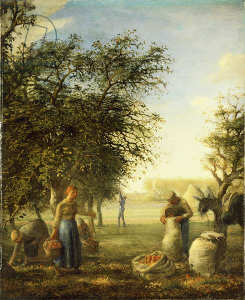 Apple harvest, by Jean-Francois Millet (1814-1875).