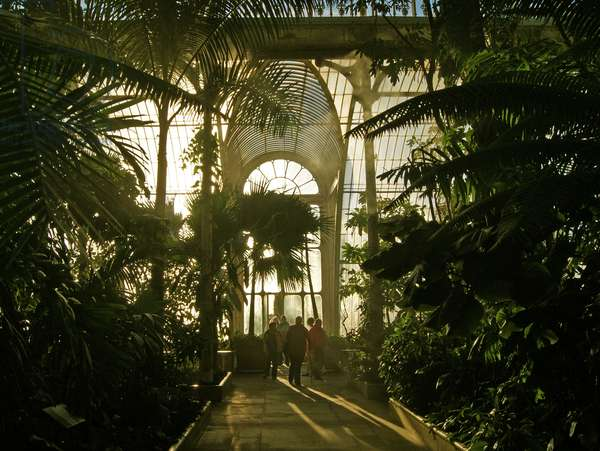 Inside the The palm House, Kew Gardens, London. (photo)