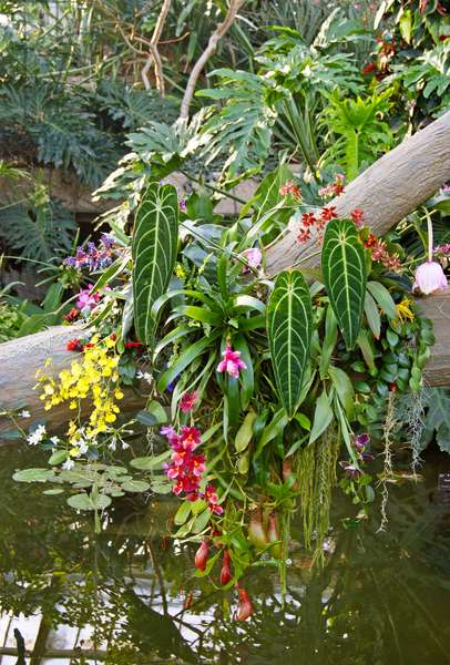 Floral display at the Kew Orchid festival, Kew Gardens, London. (photo)