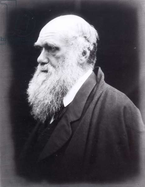 CHARLES DARWIN (1809-1882) English naturalist. Photographed, 1869, by Julia Margaret Cameron.