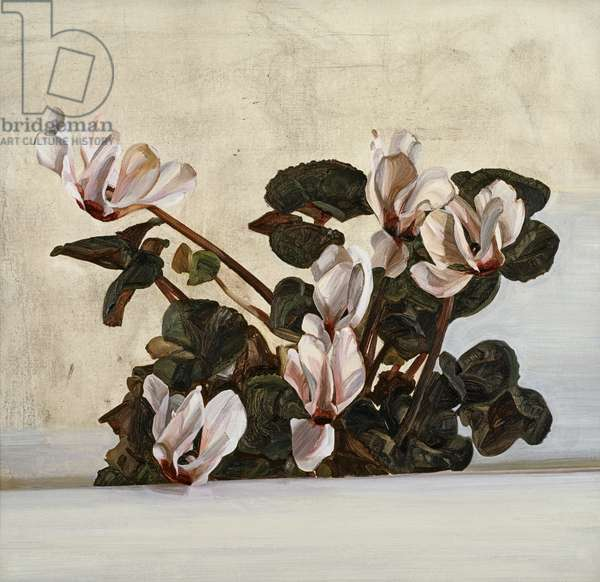 Cyclamen, 1964 (oil on canvas)