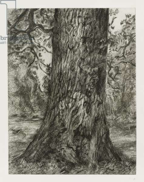 Elm Tree, after Constable, 2003 (etching on paper)