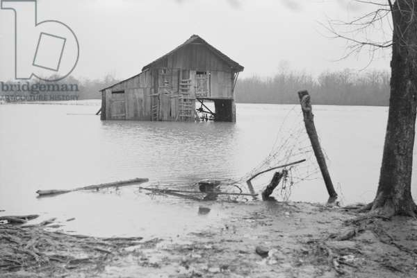 Farm Covered with Floodwaters, near Ridgeley, Tennessee, USA, 1937 (b/w photo)