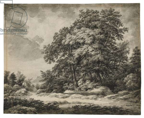 Forest Landscape (recto), c. 1838-1848 (ink and wash on laid paper)