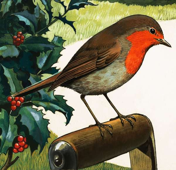 Robin Redbreast (gouache on paper)