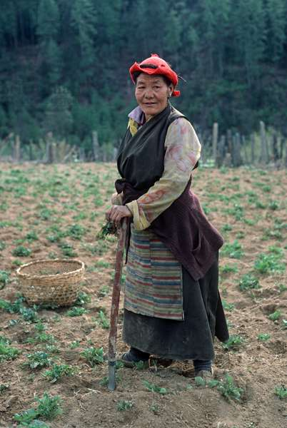 Bhutanese woman agriculture worker, Bhutan, Himalayas (photo)