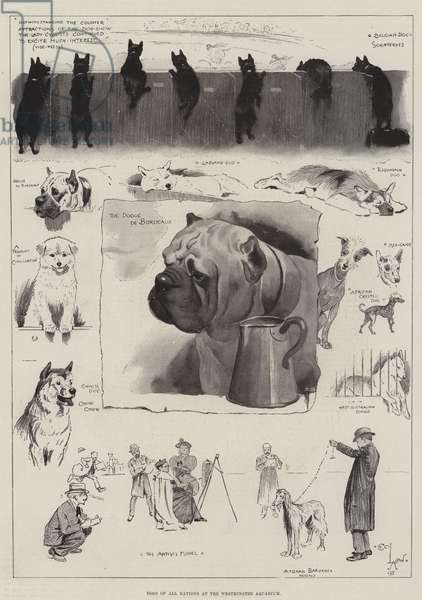 Dogs of All Nations at the Westminster Aquarium (litho)