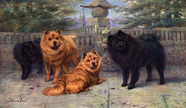 Four Champion Chow-Chows owned by Mrs Scaramanga (colour litho)