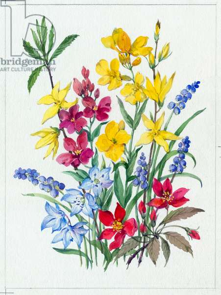 Wallflowers, scilla, grape hyacinth etc