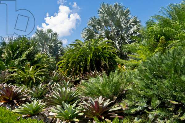 An array of plants at Fairchild Tropical Botanical Gardens (photo)
