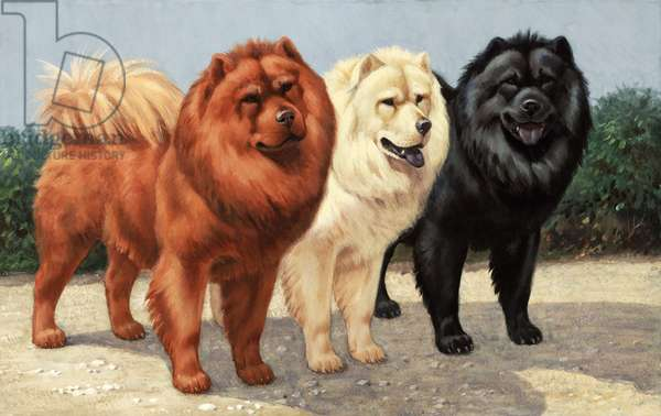 Three chows have fur of different colours (colour litho)