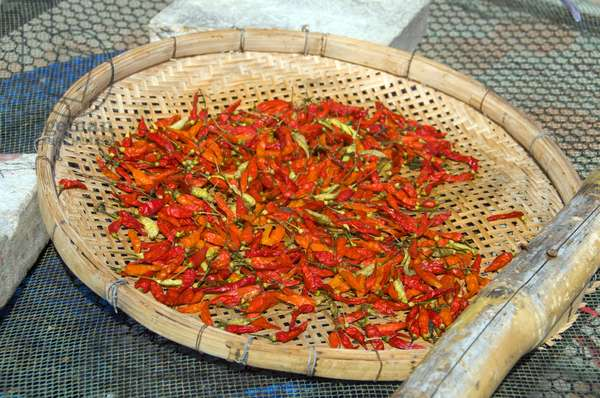 Thailand: Red chillies drying in the sun at Hat Ao Noi, Prachuap Khiri Khan Province