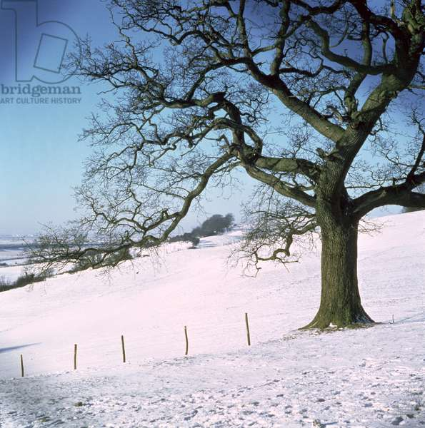Winter landscape, Hockley Downs, Essex (photo)