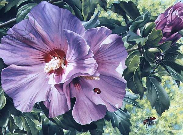 Mallow with Ladybirds (gouache on paper)