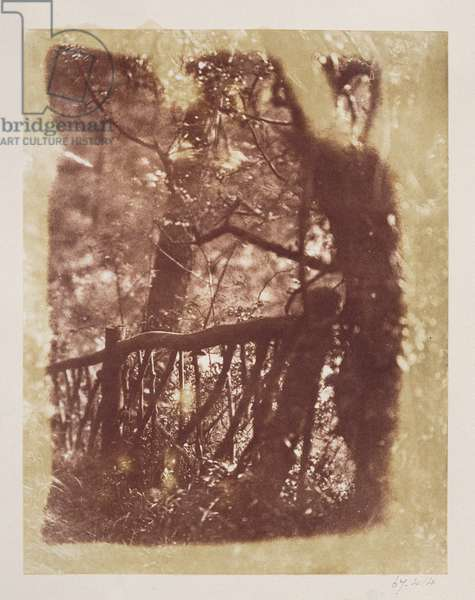 Fence and Trees in Colinton Wood (salt paper print from calotype negative)