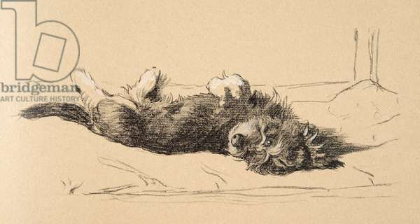 Rough Daschund Puppy Detail, 1930, Illustrations from his Sketch Book used for 'Just Among Friends', Aldin, Cecil Charles Windsor (1870-1935), later Published by Eyre and Spottiswoode Limited, 1934, Chalk and Charcoal on paper