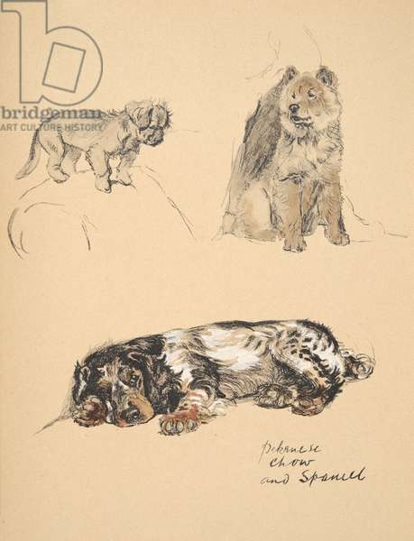 Pekinese, Chow and Spaniel, 1930, Illustrations from his Sketch Book used for 'Just Among Friends', Aldin, Cecil Charles Windsor (1870-1935), later Published by Eyre and Spottiswoode Limited, 1934, Chalk and Charcoal on paper