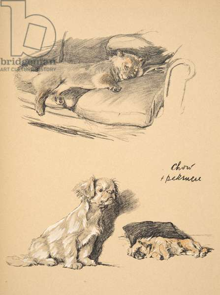 Chow and Pekinese, 1930, Illustrations from his Sketch Book used for 'Just Among Friends', Aldin, Cecil Charles Windsor (1870-1935), later Published by Eyre and Spottiswoode Limited, 1934, Chalk and Charcoal on paper