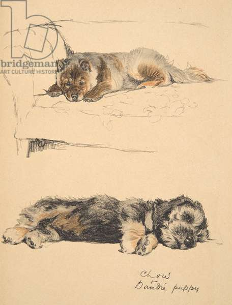 Chow and Dandie Puppy, 1930, Illustrations from his Sketch Book for used 'Just Among Friends', Aldin, Cecil Charles Windsor (1870-1935), later published by Eyre and Spottiswoode Limited, 1934, Chalk and Charcoal on paper