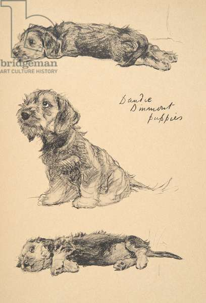 Dandie Dinmont Puppies, 1930, Illustrations from his Sketch Book used for 'Just Among Friends', Aldin, Cecil Charles Windsor (1870-1935), later Published by Eyre and Spottiswoode Limited, 1934, Chalk and Charcoal on paper