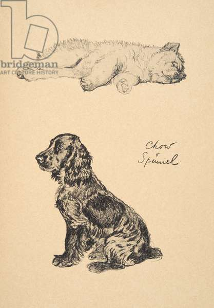 Chow and Spaniel, 1930, Illustrations from his Sketch Book used for 'Just Among Friends', Aldin, Cecil Charles Windsor (1870-1935), later Published by Eyre and Spottiswoode Limited, 1934, Chalk and Charcoal on paper