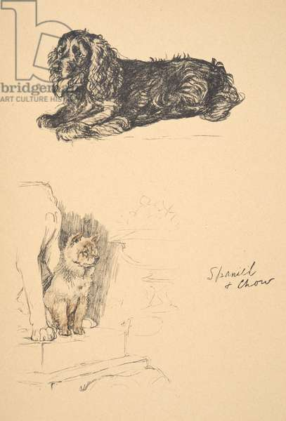 Spaniel and Chow, 1930, Illustrations from his Sketch Book used for 'Just Among Friends', Aldin, Cecil Charles Windsor (1870-1935), later Published by Eyre and Spottiswoode Limited, 1934, Chalk and Charcoal on paper