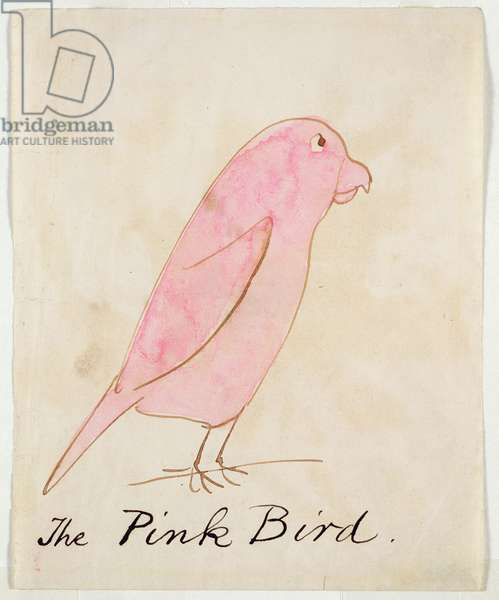 The Pink Bird, from 'Sixteen Drawings of Comic Birds' (pen & ink and w/c on paper)