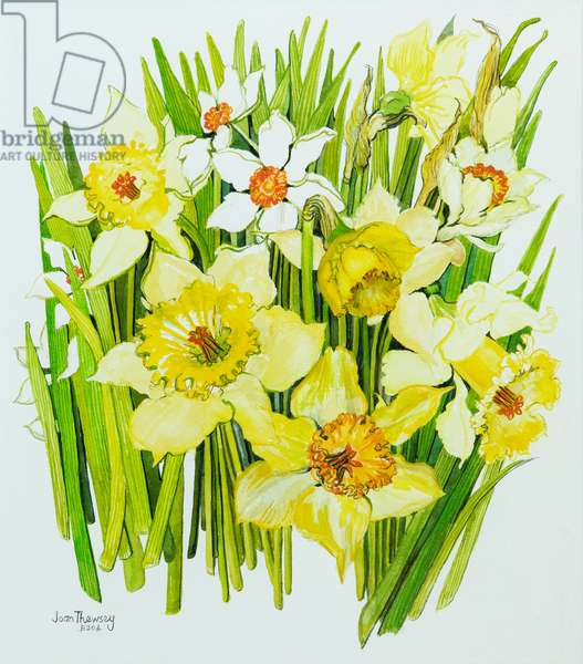 Daffodils and narcissus (w/c on hand-made paper)
