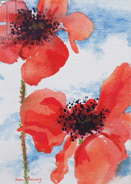 Poppies (w/c on paper)