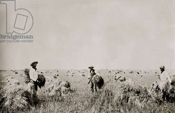 Indians farming on Fort Peck Reservation (photo)