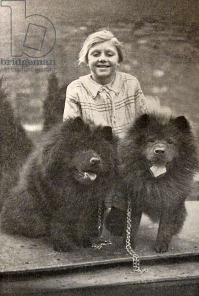 Two Chinese Chow Chow dogs