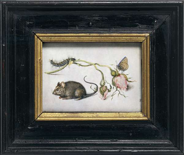A Mouse and a Rose, by Jan Brueghel the Elder, 1605, oil on copper