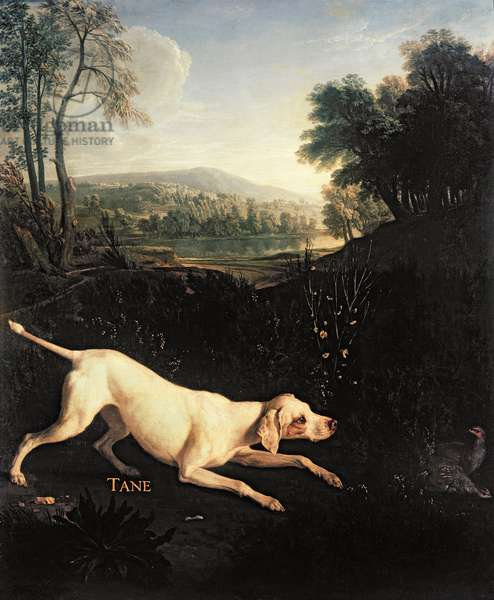 Louis XIV's Dog, Tane (oil on canvas)