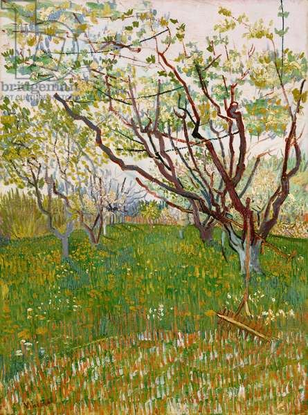 The Flowering Orchard, 1888 (oil on canvas)